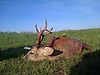 roe-deer-hunting-350gr.jpg