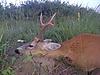 roe-deer-hunting-380gr.jpg