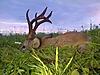 roe-deer-hunting-550gr.jpg