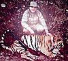 tiger-04.jpg