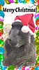 Cindy_Christmas.jpg