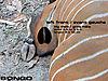 bongo-tracks.jpg