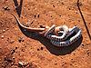 zebra-snake-01.jpg
