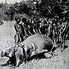 hunting-hippo3.jpg