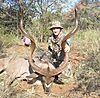 Kudu_bow.jpg