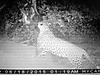 hunting-leopard-0113.jpg