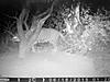 hunting-leopard-0121.jpg
