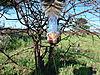 hunting-guineafowl-04.JPG