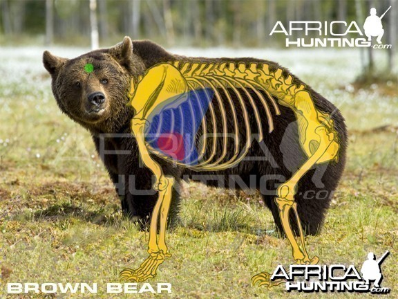 Bison Anatomy Shot Placement Vitals Images Pictures Photos