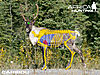 caribou-vitals-hunting.jpg