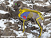 bighorn-sheep-vitals-bowhunting.jpg