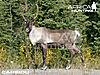 caribou-bowhunting-vitals.jpg