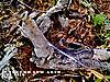 2_coelho_com_arco_9-10-2010_4_.jpg