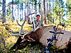 Elk_2010_Picks_3_of_6_.jpg