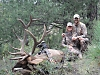 elk-hunting-new-mexico.jpg
