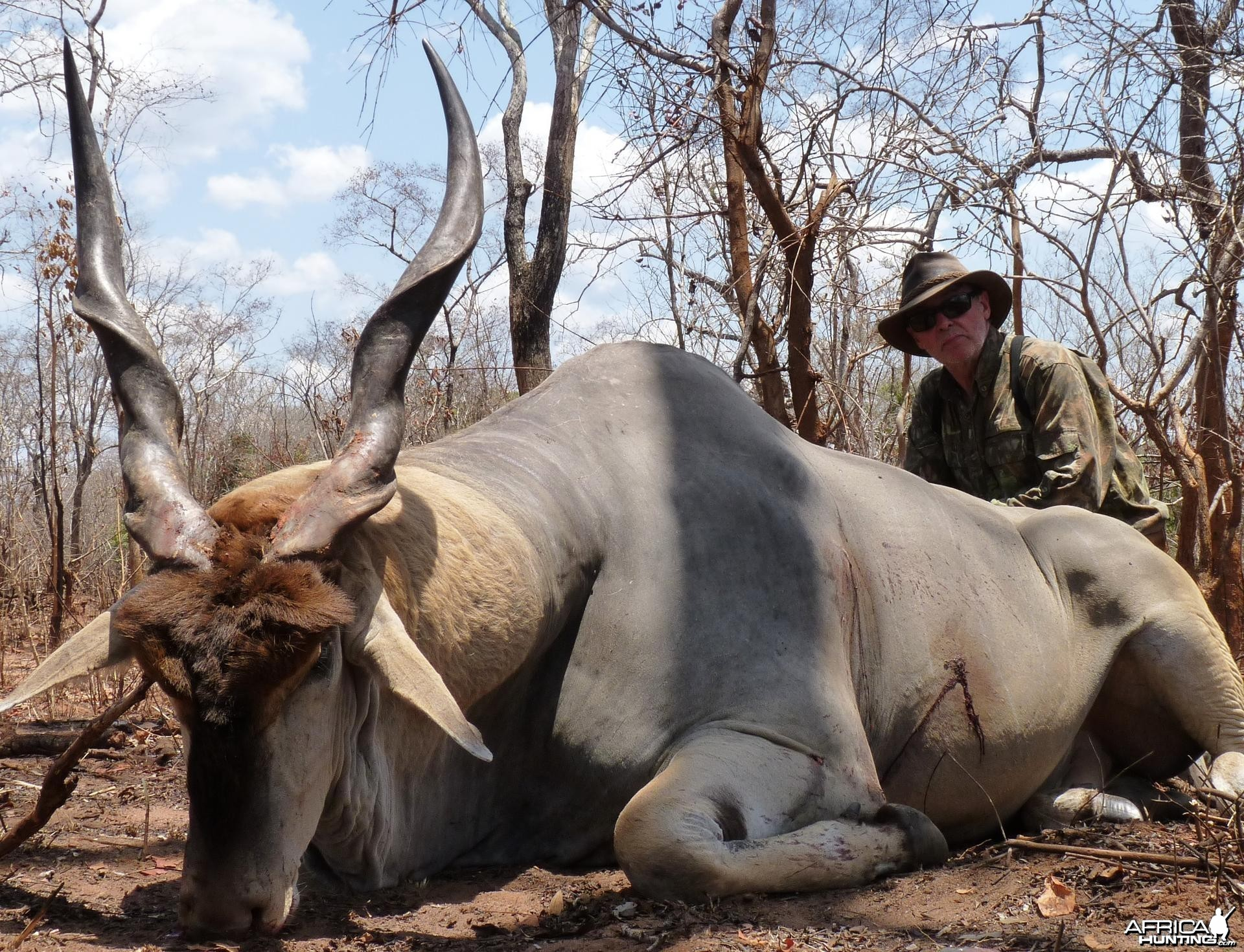 40 1/2 East african Eland hunted in the Selous, Tanzania