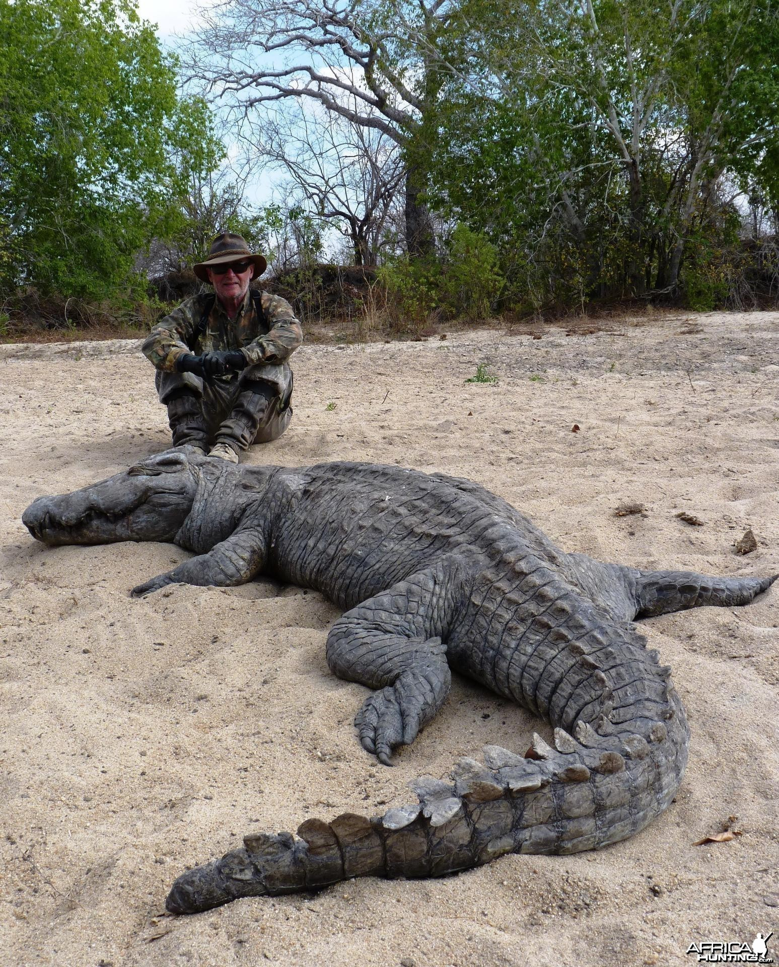Crocodile hunted in from a hole, Tanzania