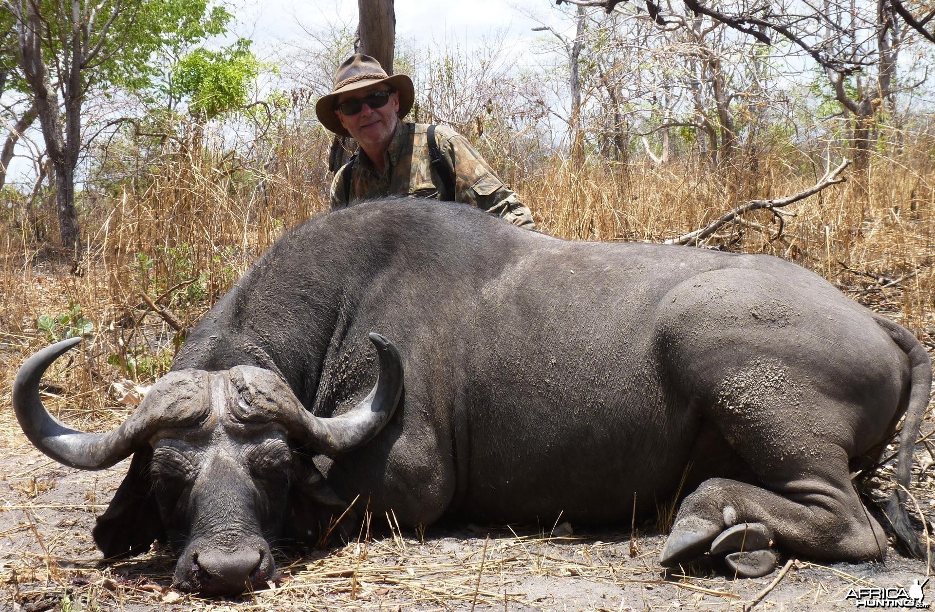 Buffalo hunted in the Selous, Tanzania