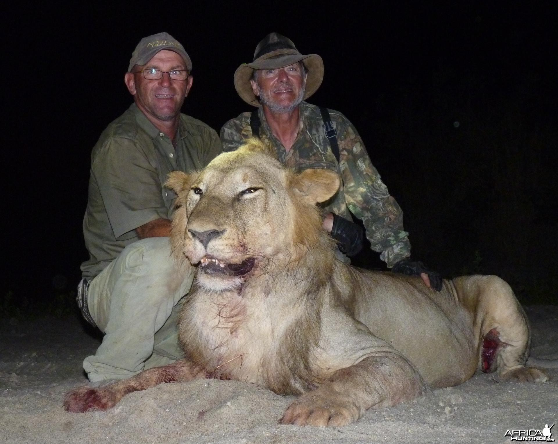 Lion hunted in the Selous, Tanzania
