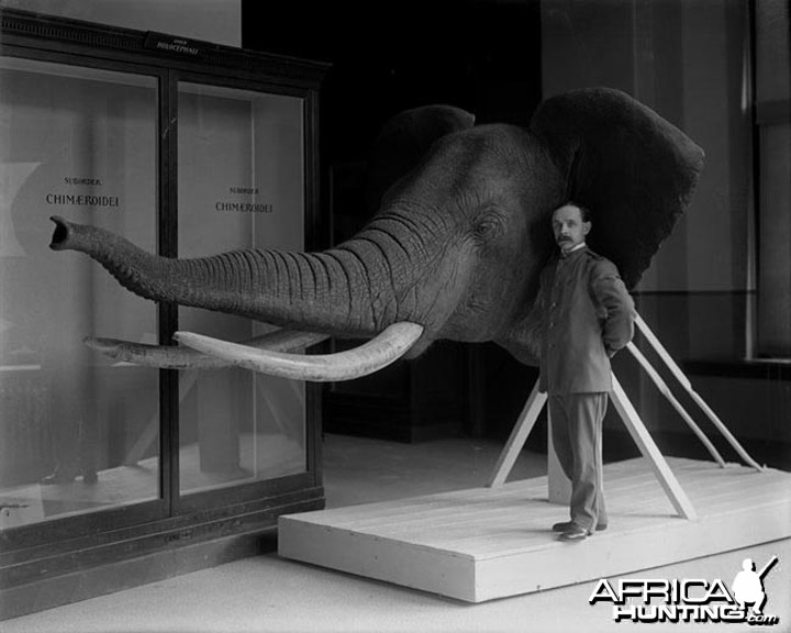 Elephant Taxidermy