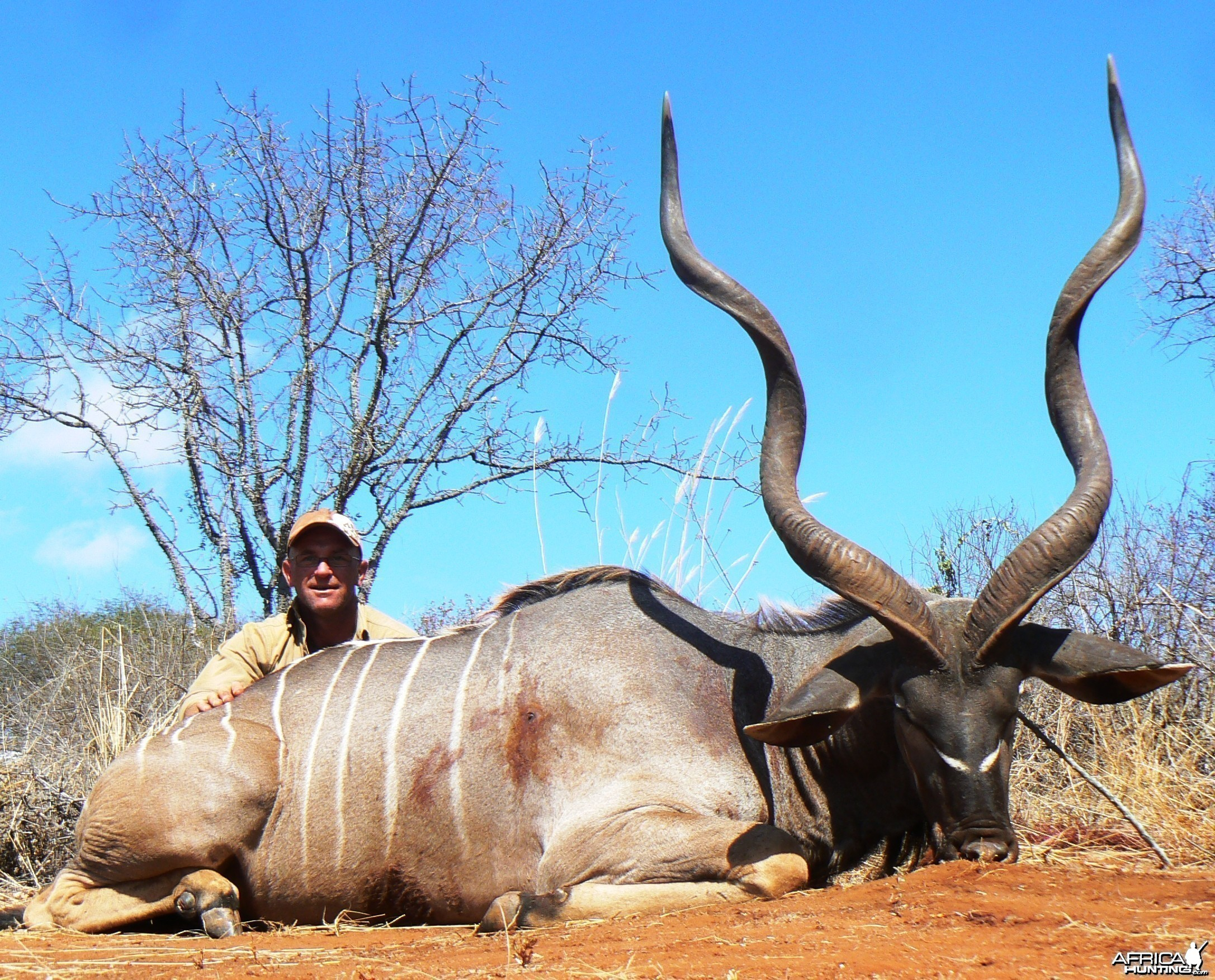"53"" East African Kudu"