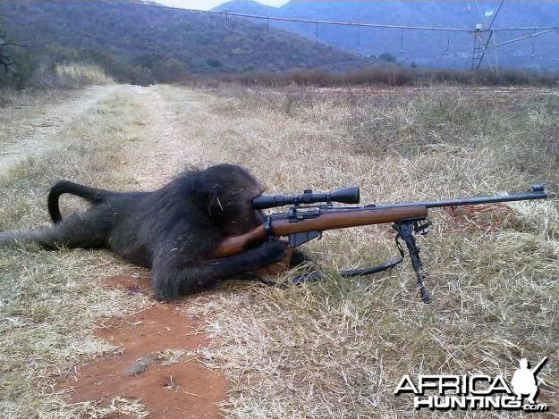 Dangerous animal!