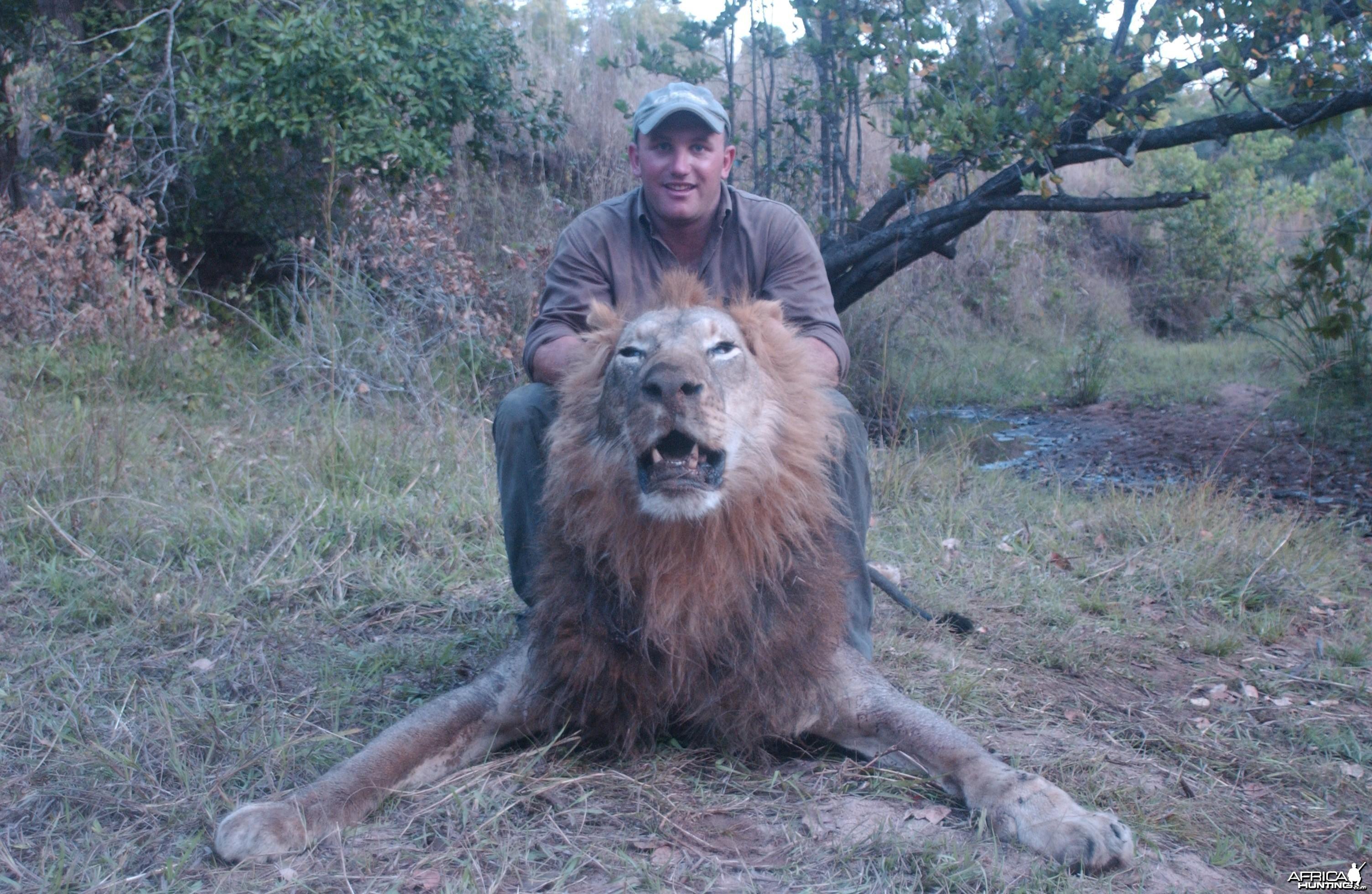 Wuku Tanzania Lion