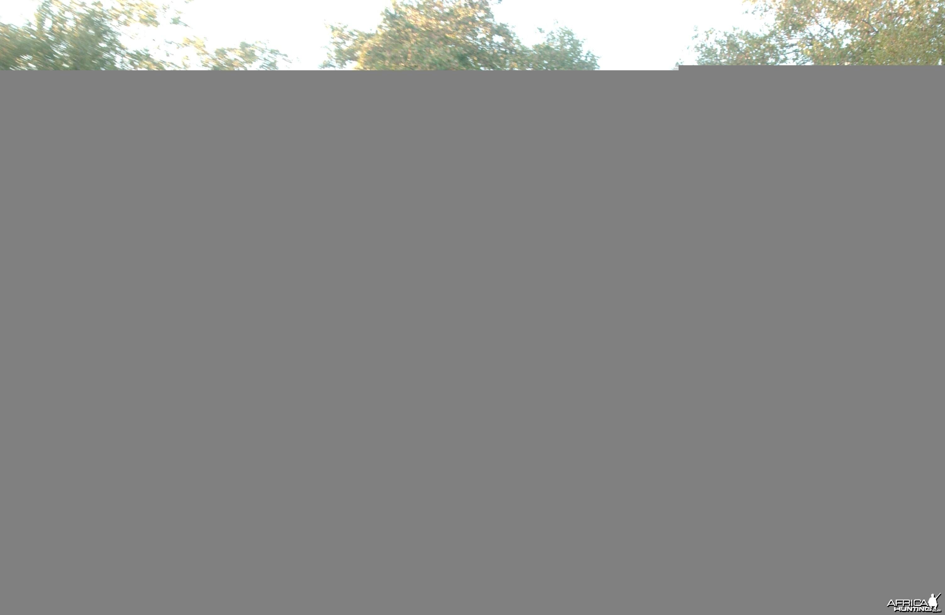 Charging Elephant!