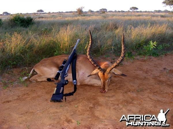 Impala ram Limpopo 2010