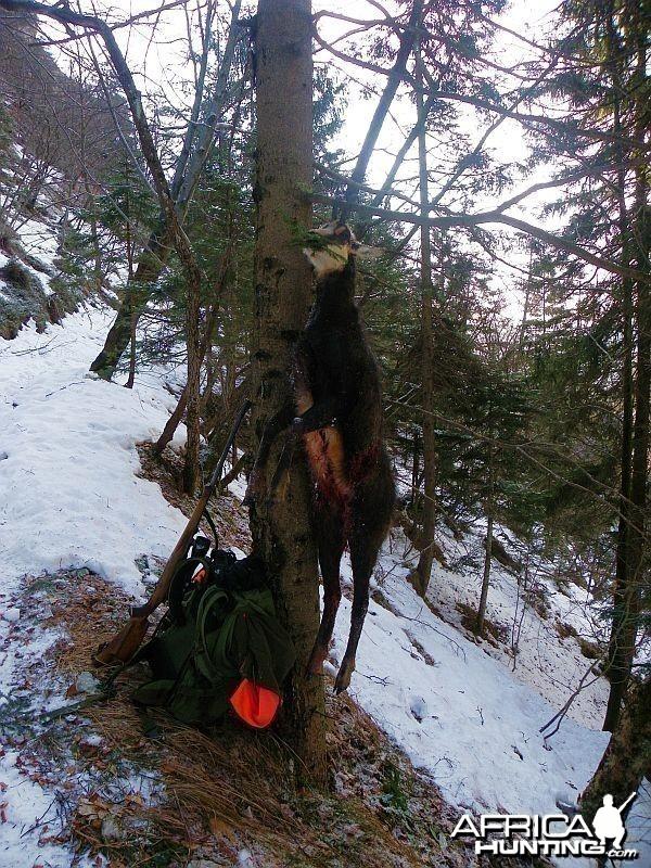 Hunting Chamois Slovenia