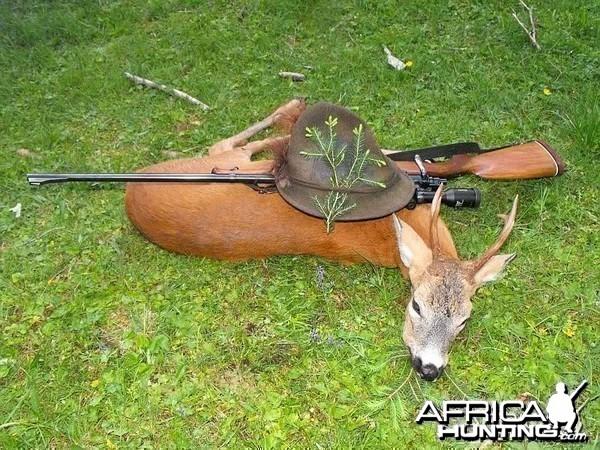 Hunting Roe Deer Slovenia