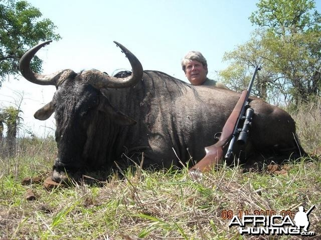 Blue Wildebeest hunted with Leeukop Safaris