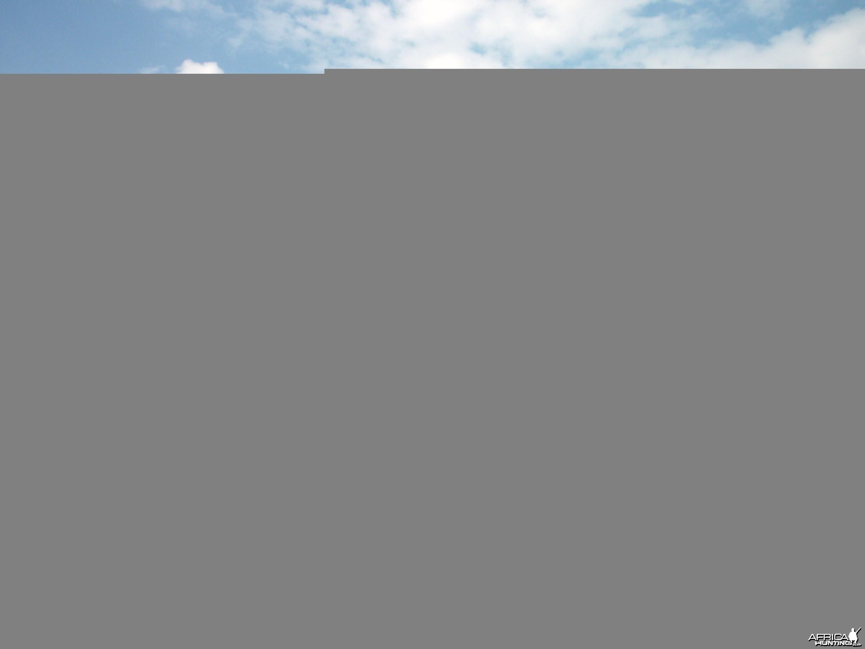 Kudu Hunting in Namibia