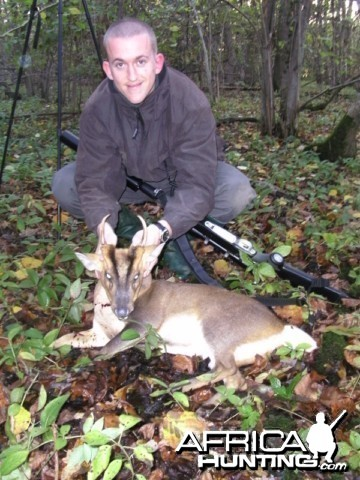 Gold Medal Muntjac hunted in Cambridgeshire