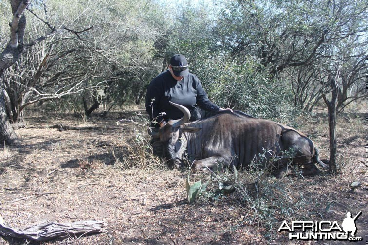 Bowhunting Wildebeest South Africa