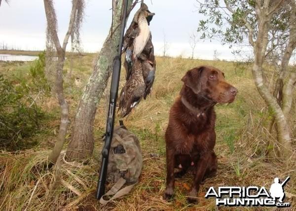 Choco my hunting companion
