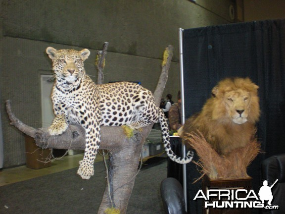 Taxidermy Leopard & Lion