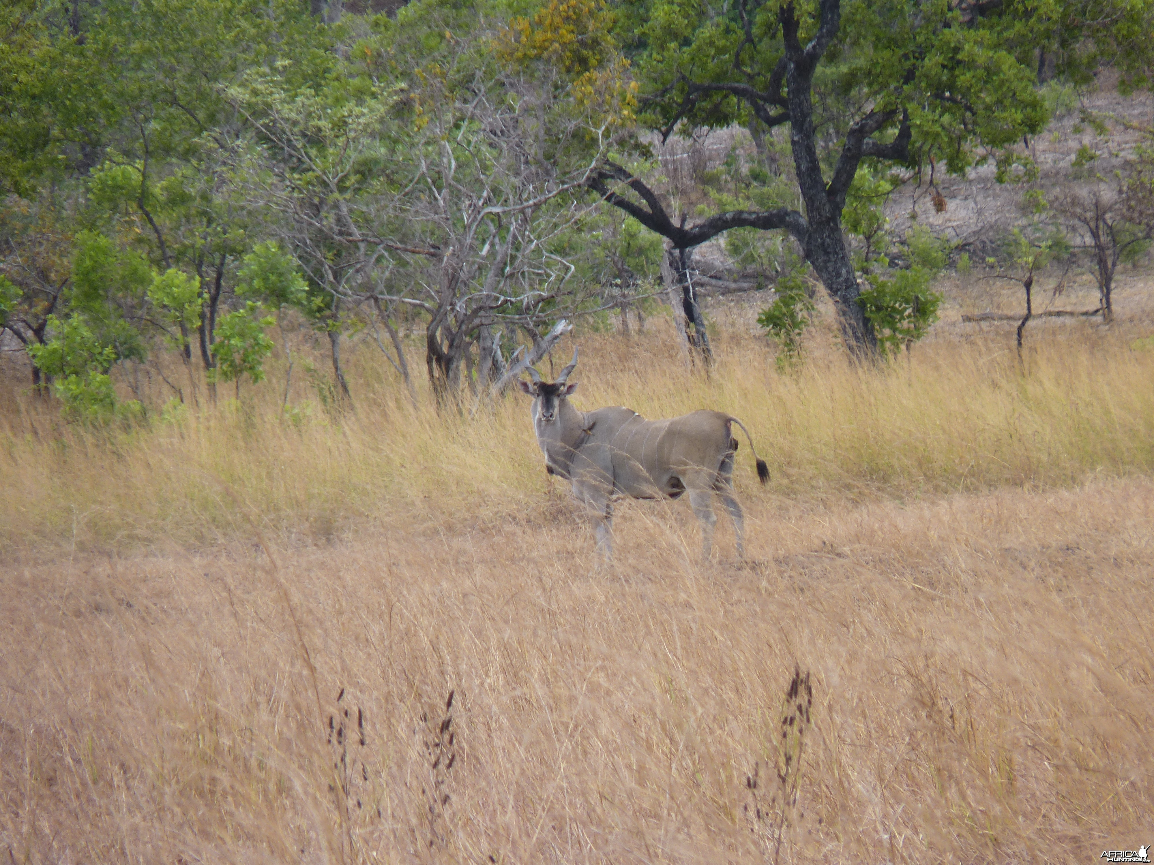 africa-hunts