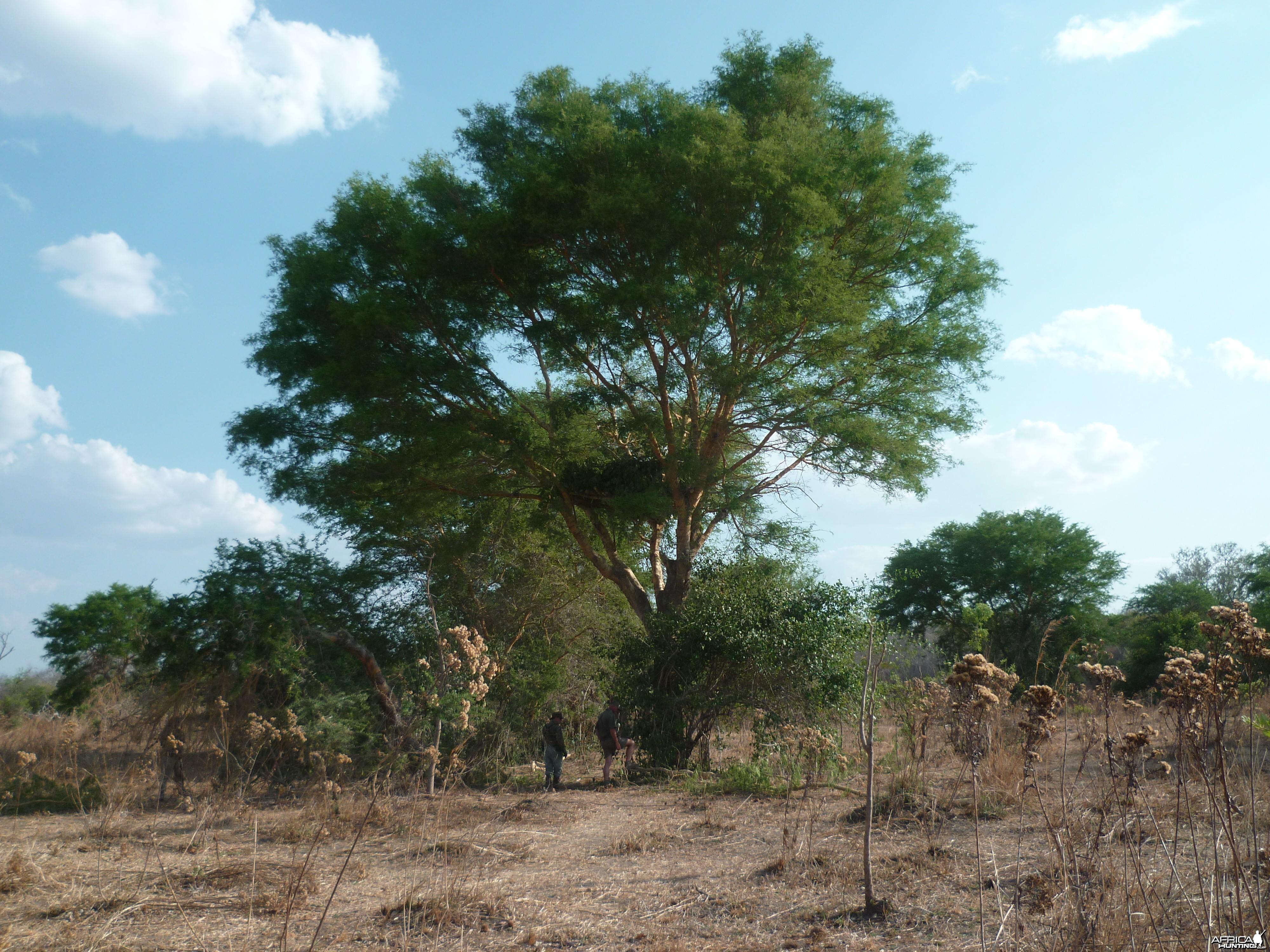 Hunting blind in Tanzania