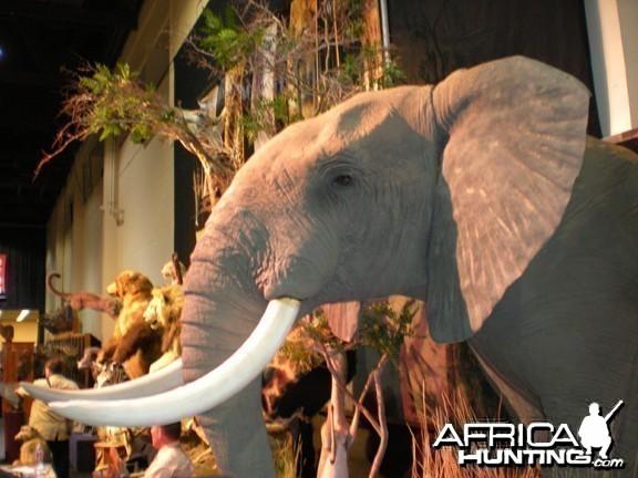 Taxidermy Elephant