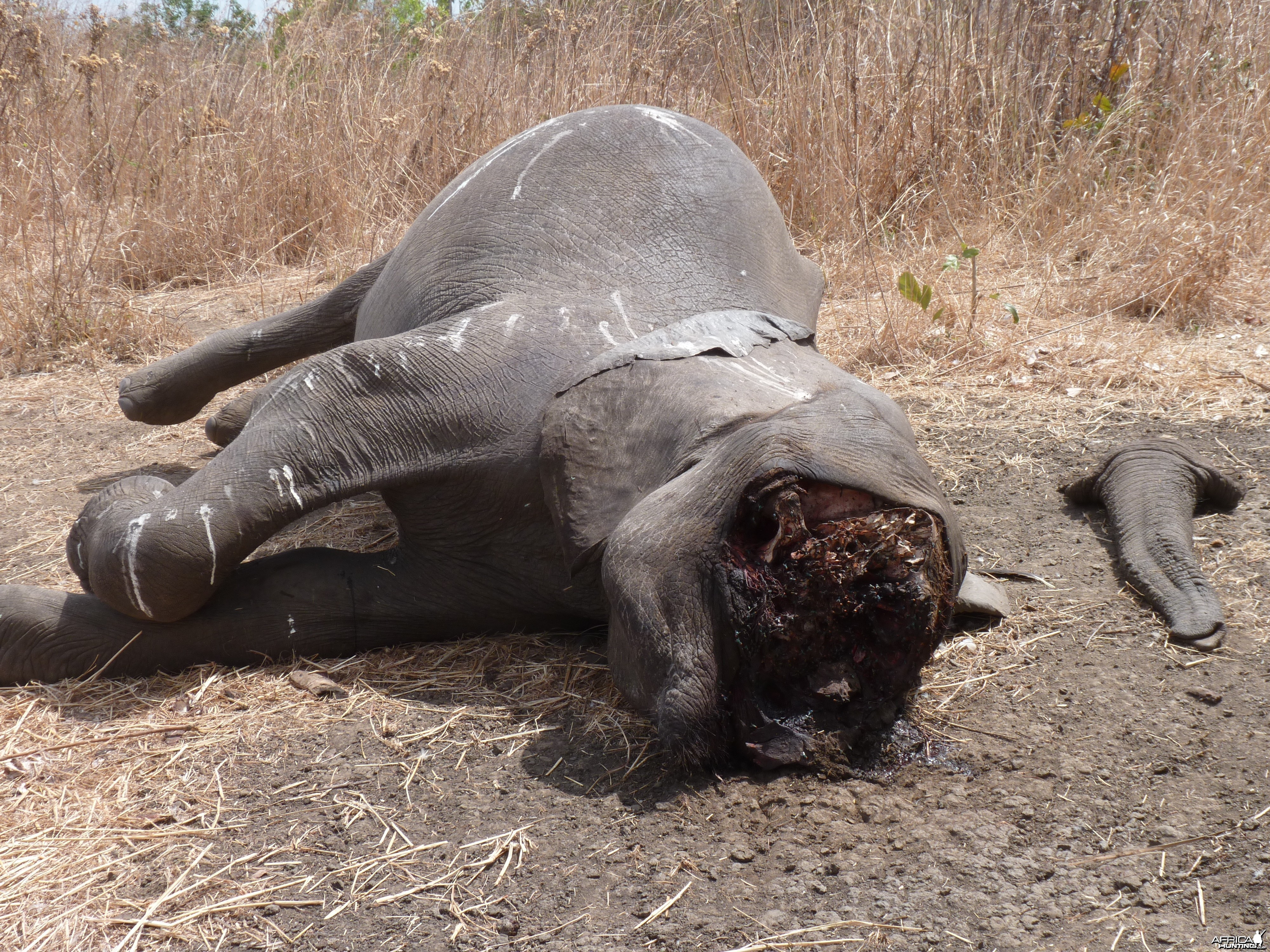 Elephant poaching in Tanzania