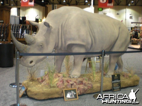 Taxidermy Rhino