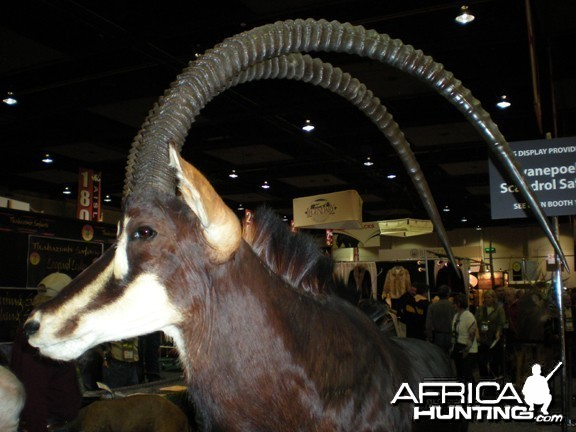 Taxidermy Sable Antelope