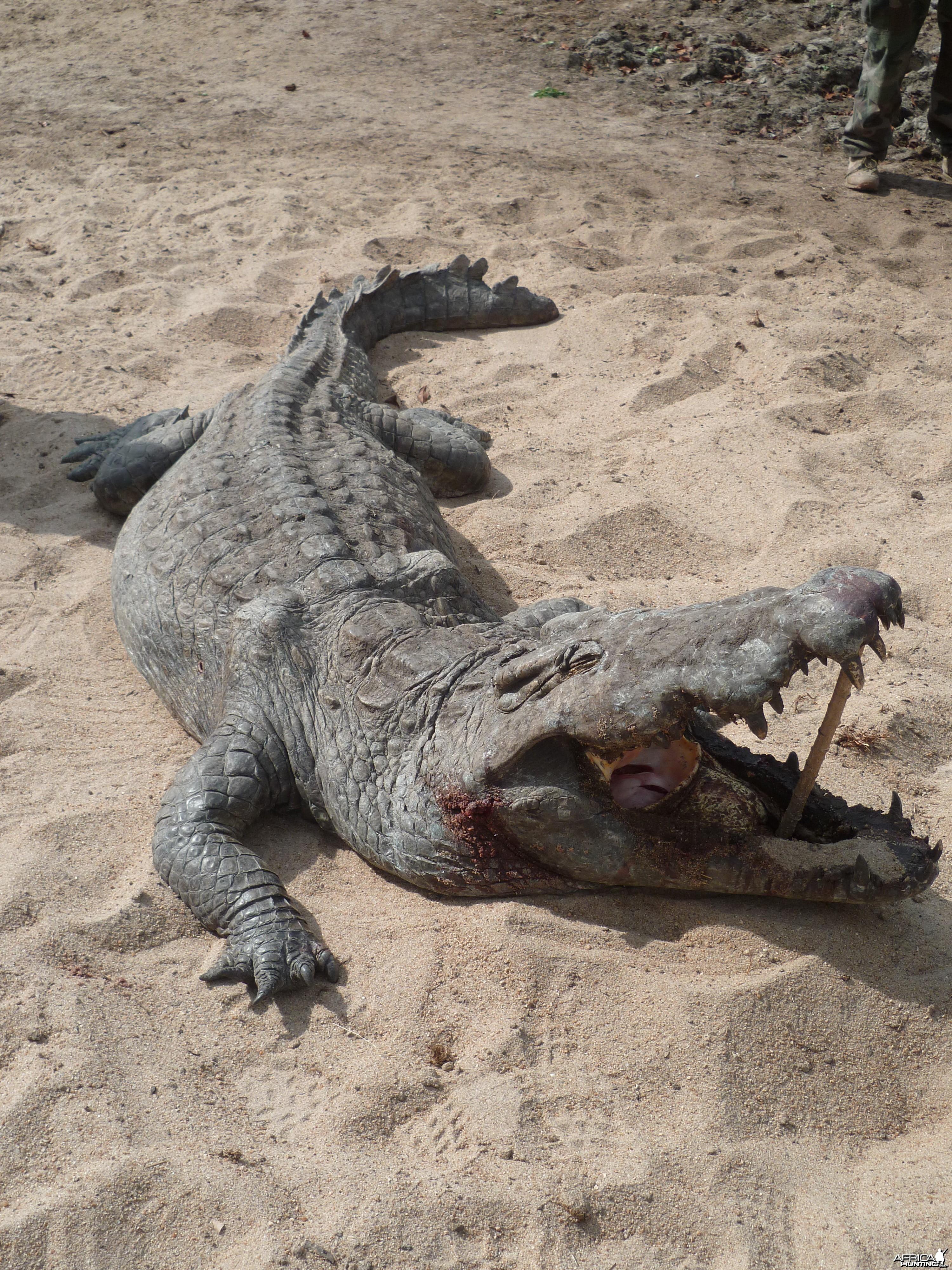 Hunting Croc in Tanzania