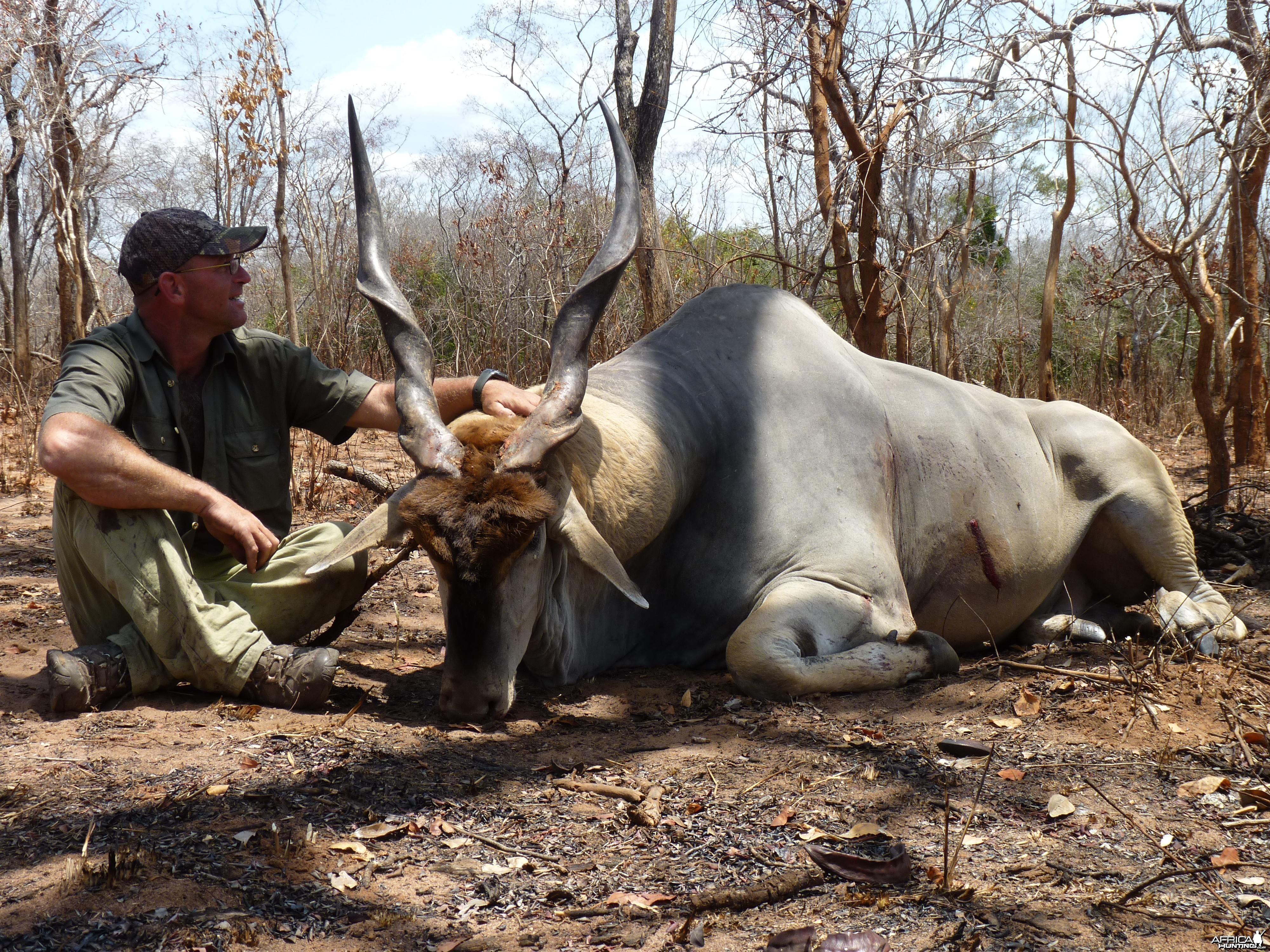 East African Eland hunted in Tanzania