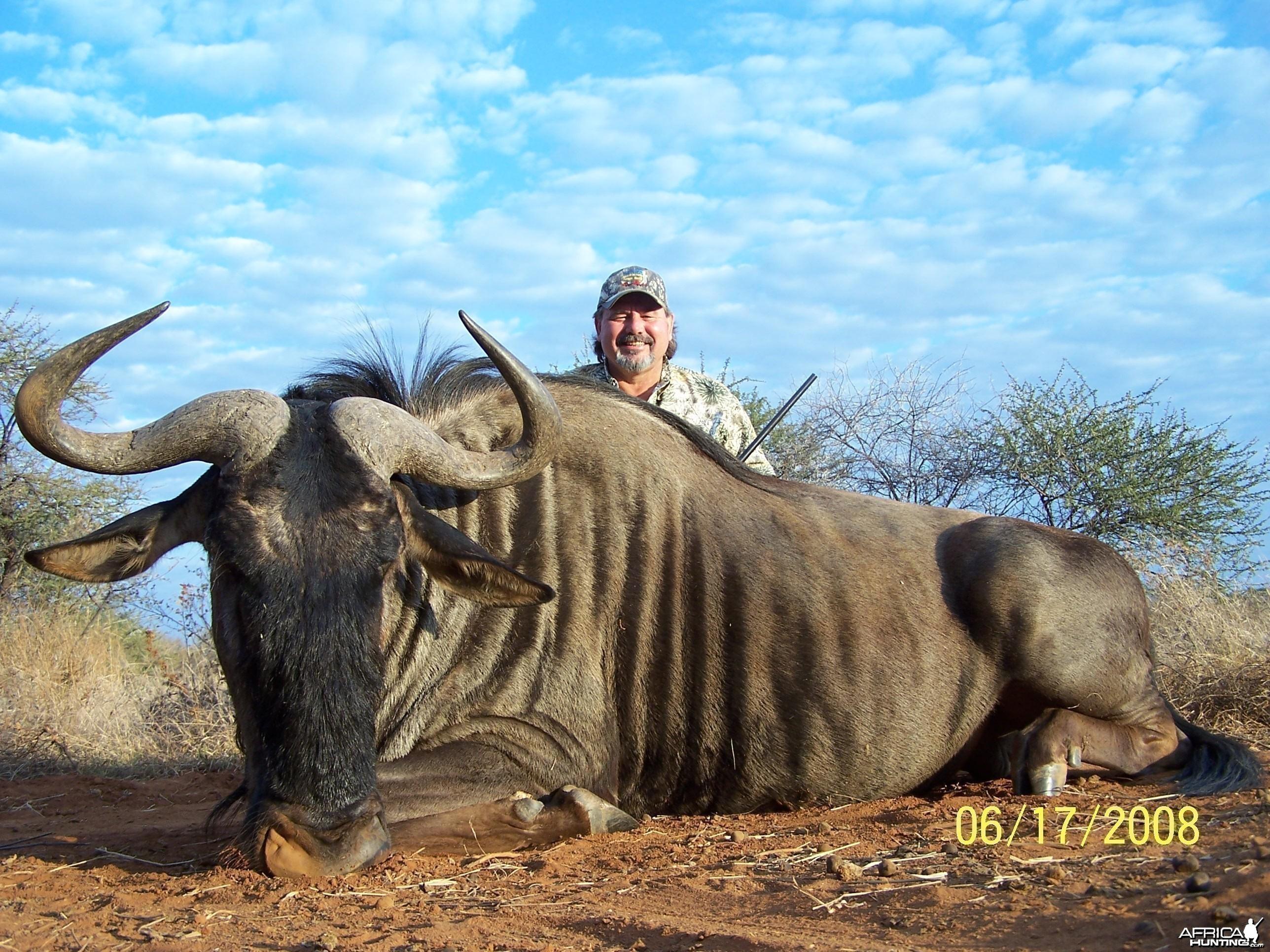 Blue Wildebeest;2008