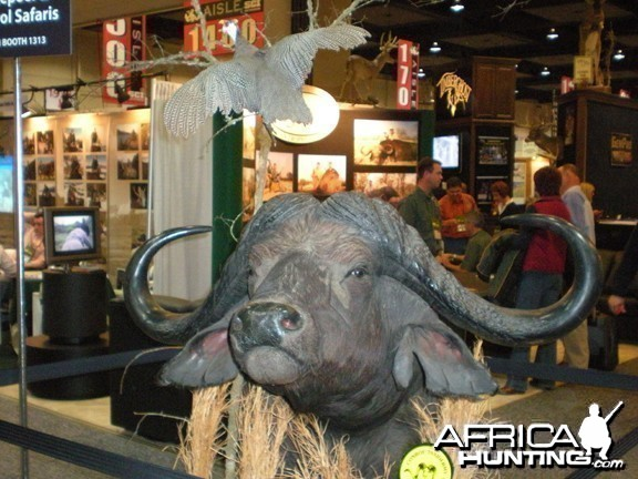 Taxidermy Buffalo
