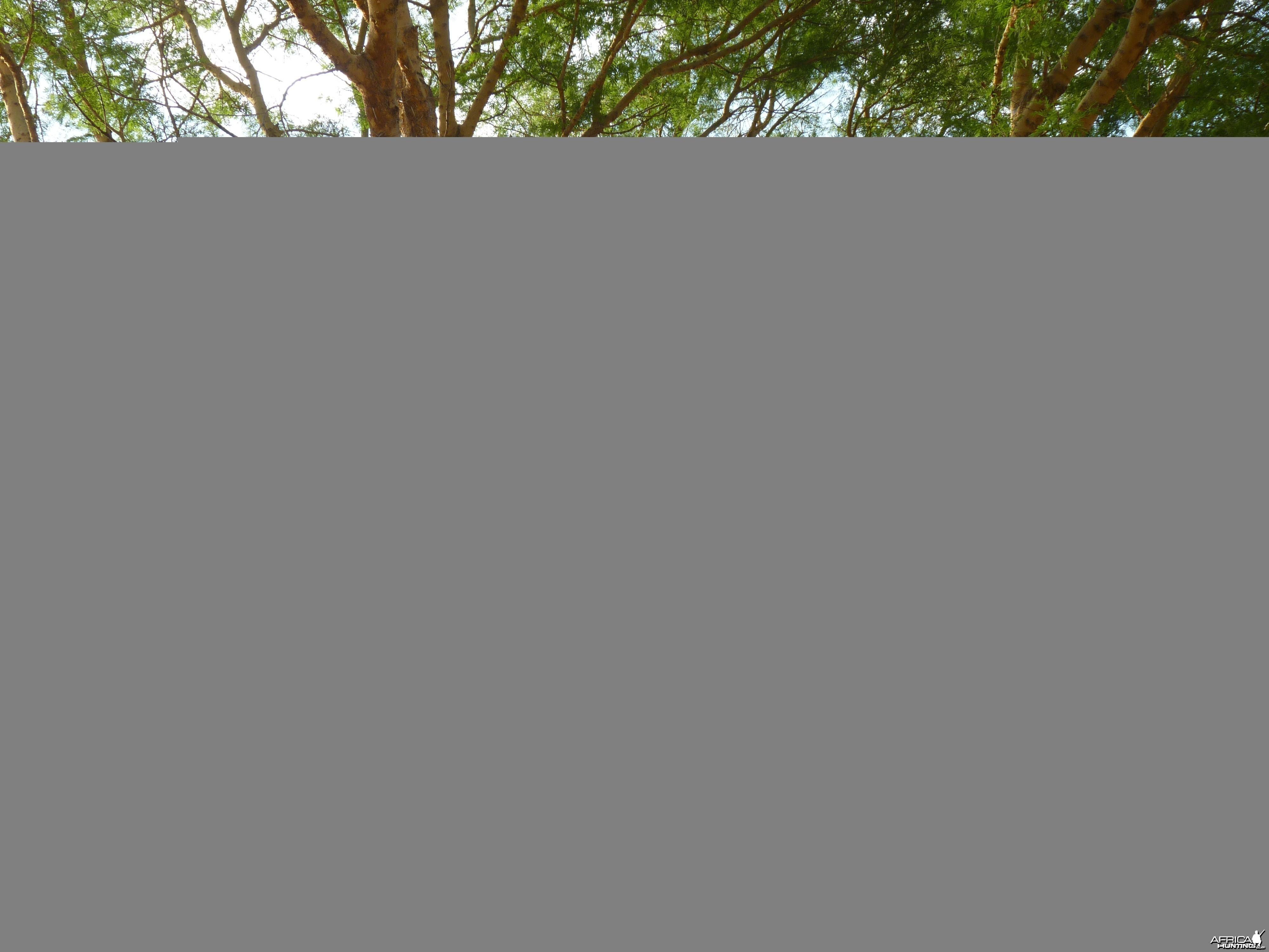 Hunting Hide Tanzania