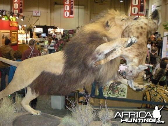 Taxidermy Lion & Hyena
