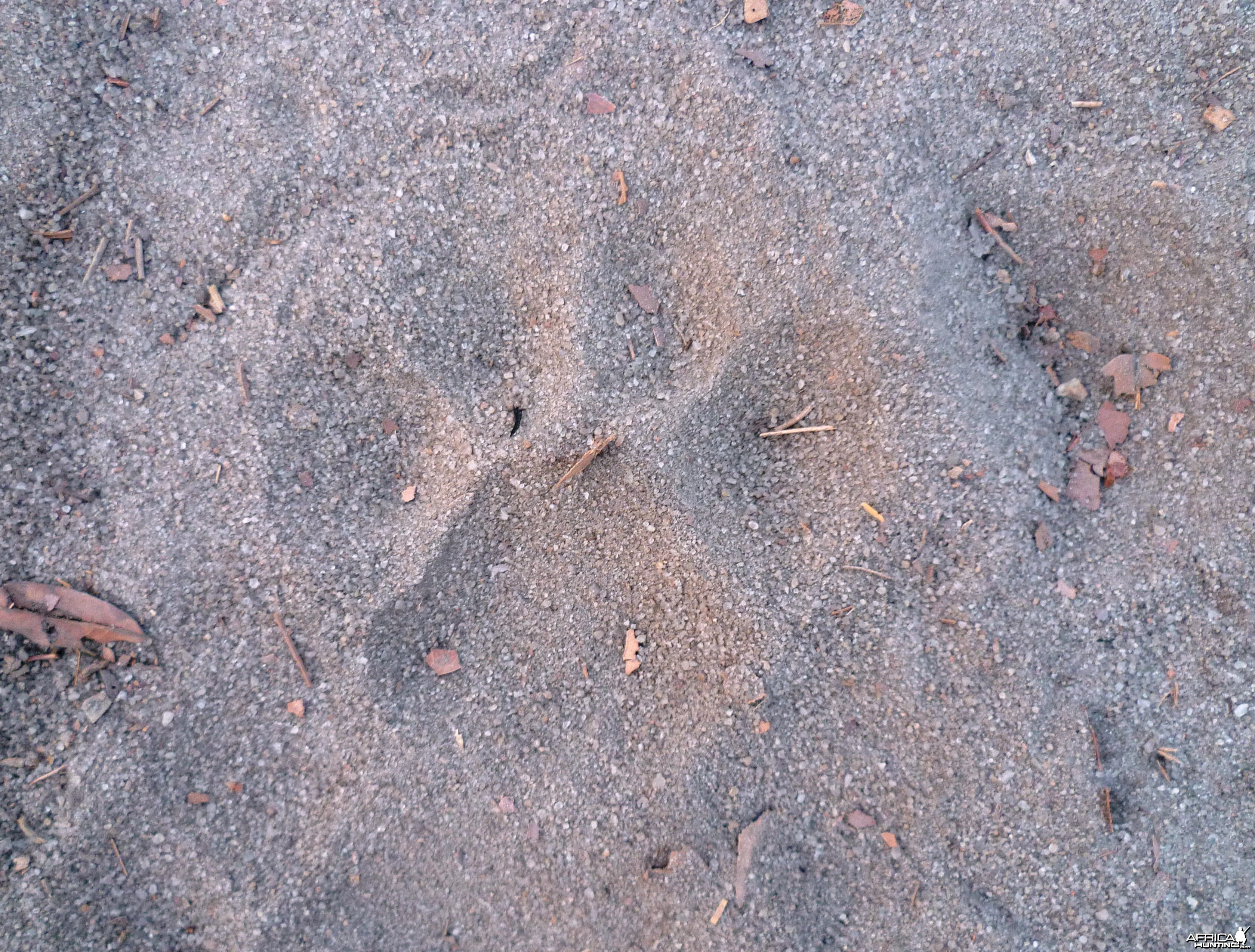 Lion Track